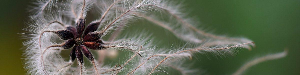 seeds-3013260_1920